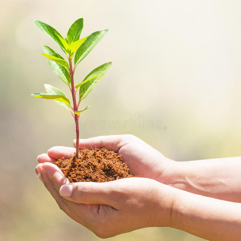 Plantation du nouvel arbre image libre de droits