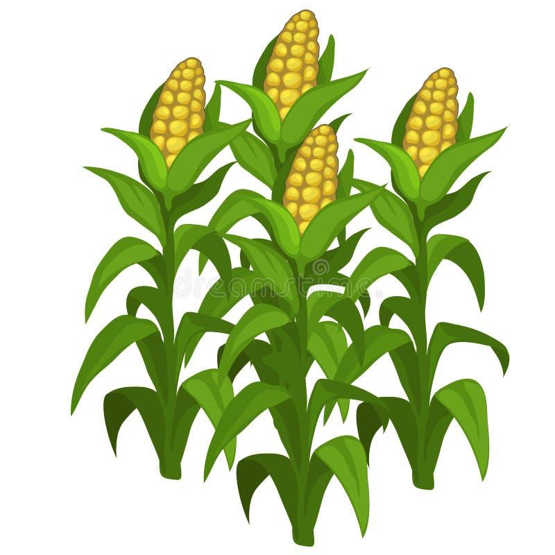 Plantation et culture de maïs Vecteur d'isolement illustration stock