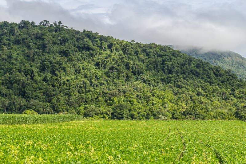 Plantation et forêt de soja images stock