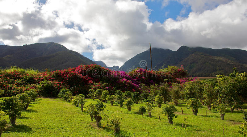 Plantation hawaïenne photographie stock libre de droits