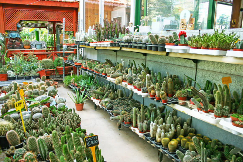 Download Plantation house stock image. Image of botany, farm, green - 28782163