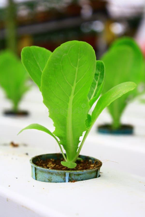 Plantation hydroponique images stock