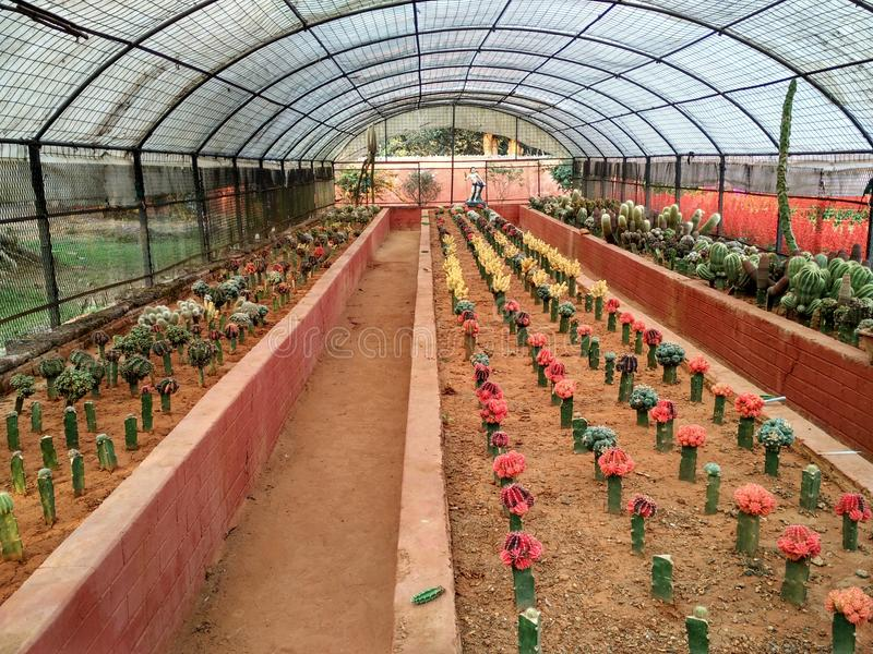 Plantation stock photography