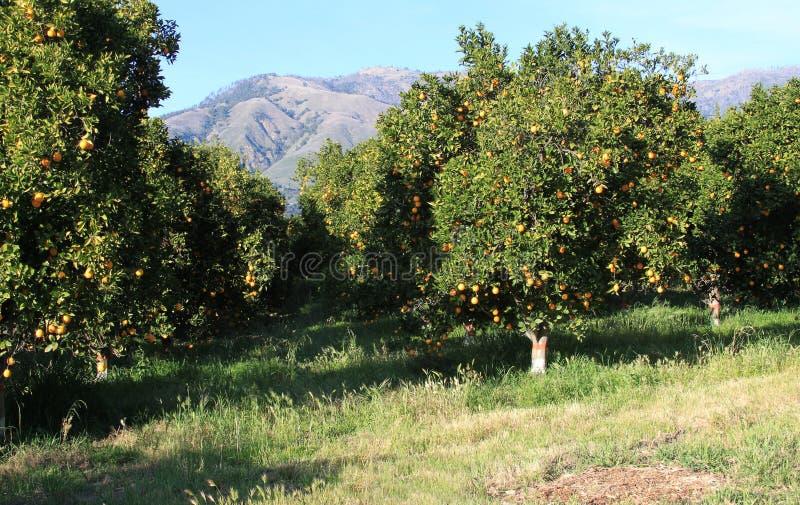 Plantation orange image libre de droits