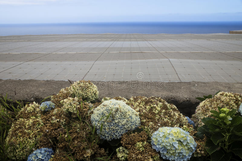 Plantation sea view. Flowers and plantation nets in front of the Atlantic, El Hierro stock photo