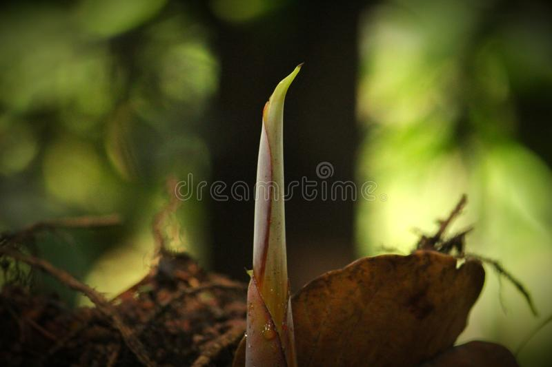 Sprout from the debris royalty free stock photography