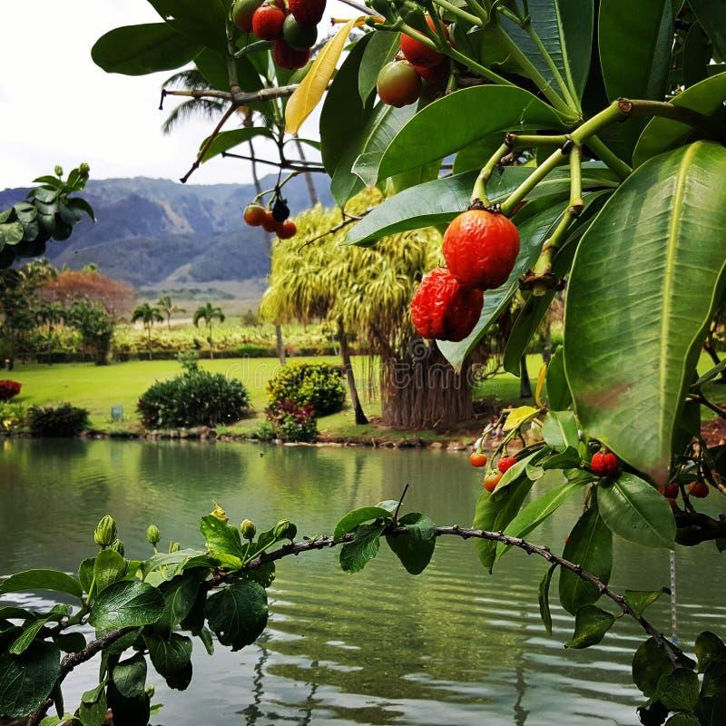 Plantation tropicale de Maui photo libre de droits