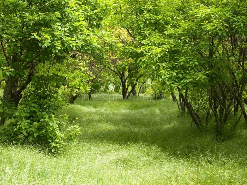 Plantation verte. images libres de droits