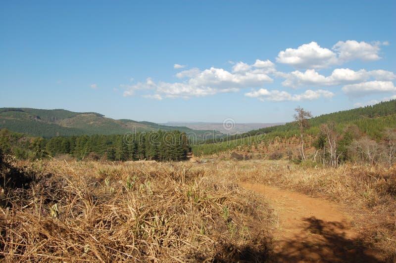 Plantations d'arbre dans Mpumalanga, Afrique du Sud photographie stock libre de droits