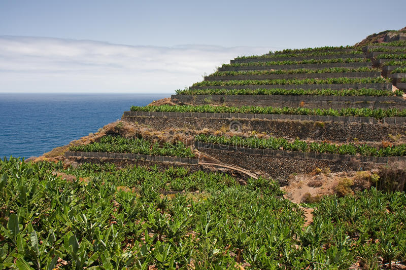 Plantations de banane à la La Palma, Îles Canaries photo stock