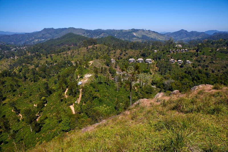 Plantations de thé au Sri Lanka image libre de droits