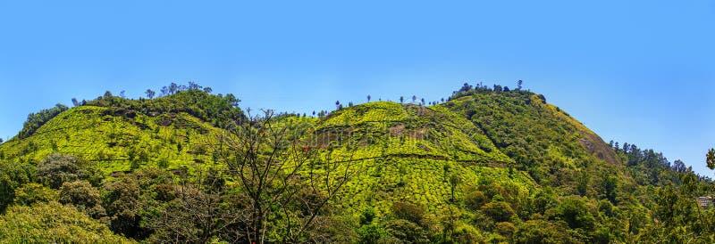 Plantations de thé dans Munnar, Kerala, Inde photographie stock