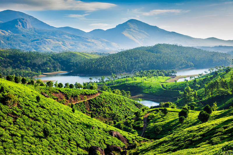 Plantations et rivière de thé en collines Le Kerala, Inde photo stock