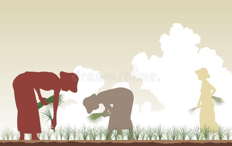 plantatorzy ryżowi ilustracja wektor
