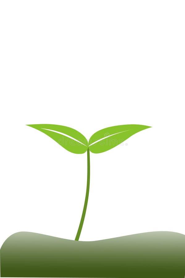 plante illustration stock