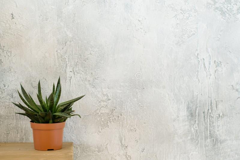 Plante d'intérieur moderne de conception intérieure de décor à la maison d'usine images libres de droits