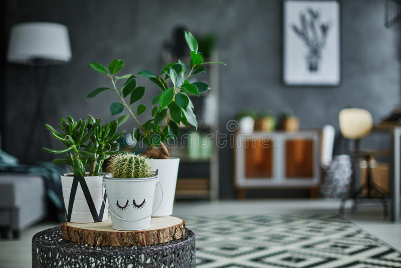 Plante d'intérieur verte décorative dans le pot photos stock
