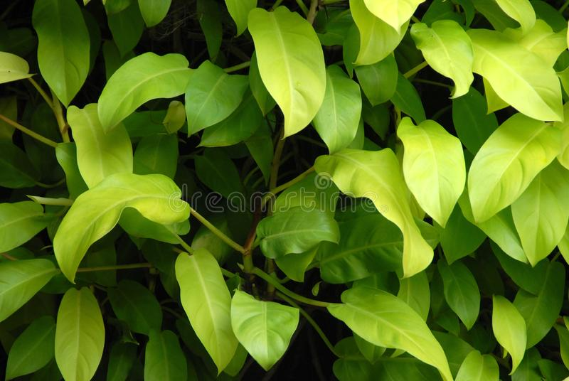 Plante d ombrage