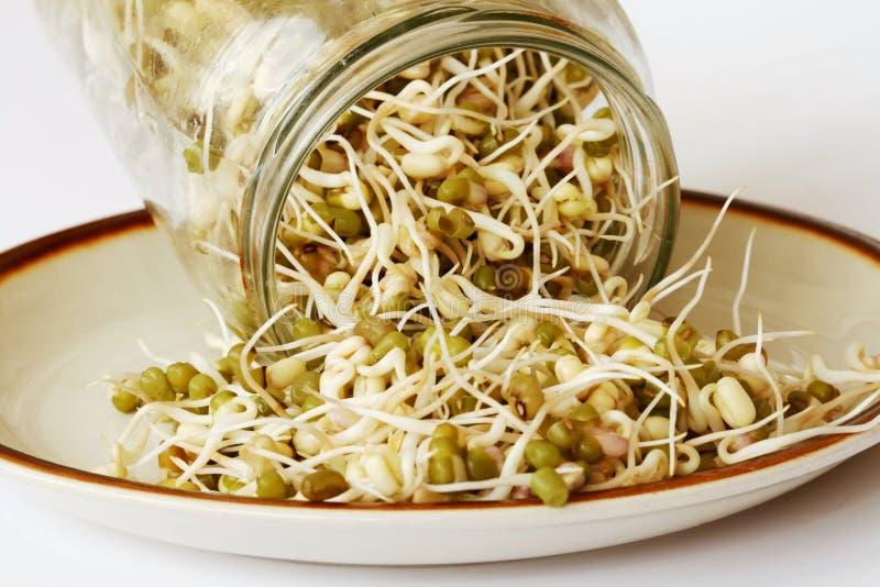Plante de fèves de mung image libre de droits