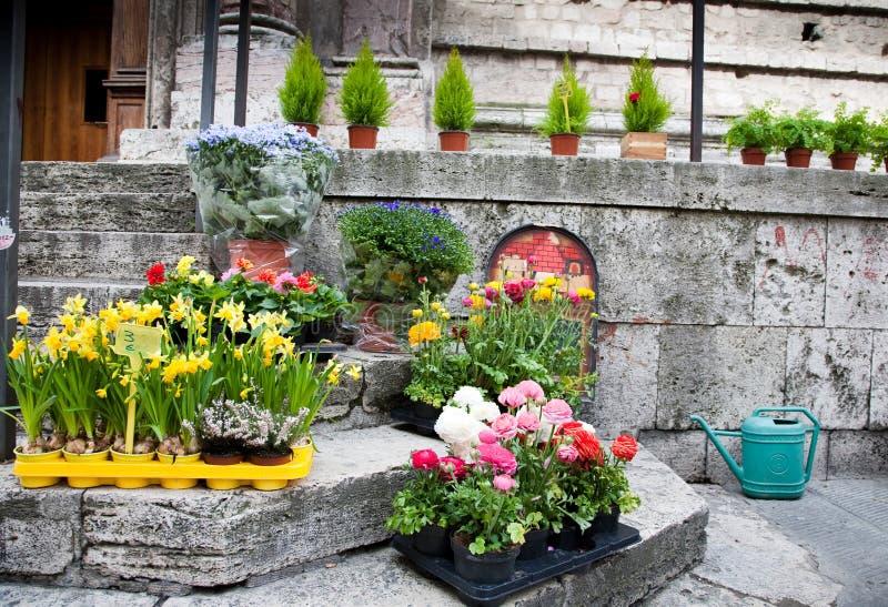 Plante de fleur sur la rue image libre de droits