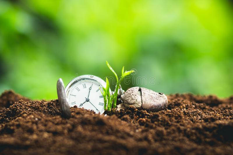 Plante el crecimiento de los árboles del establecimiento de semillas, las semillas están germinando en suelos de la buena calidad imagen de archivo libre de regalías
