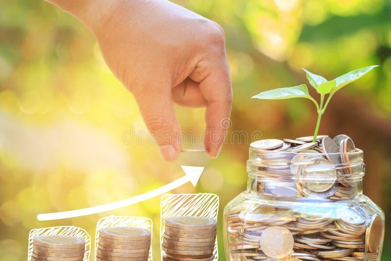 Plante el crecimiento en el tarro de cristal de las monedas con la mano del varón o de la hembra puesta foto de archivo