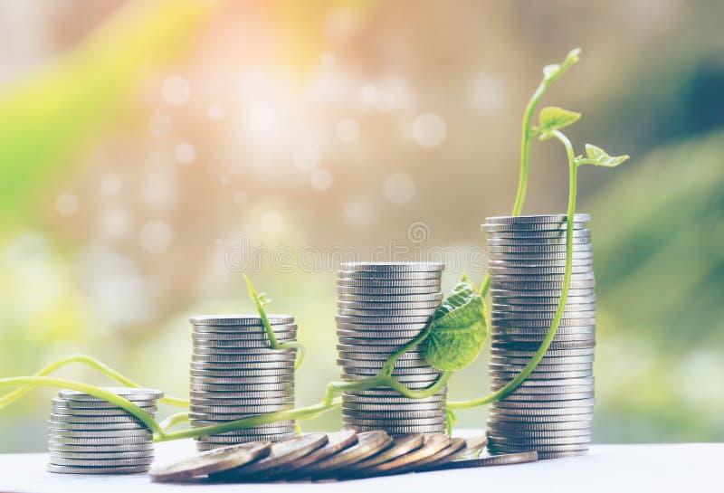 Plante el crecimiento en monedas de los ahorros - inversión e interese el concepto para las finanzas foto de archivo libre de regalías