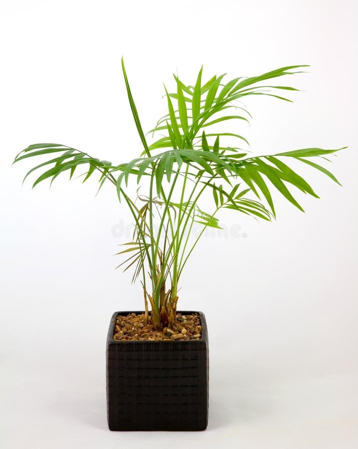 Plante en pot à la maison images stock