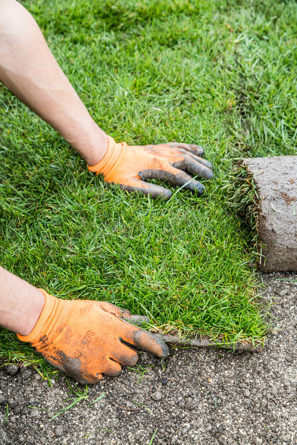 Plante la nouvelle herbe de gazon photos stock