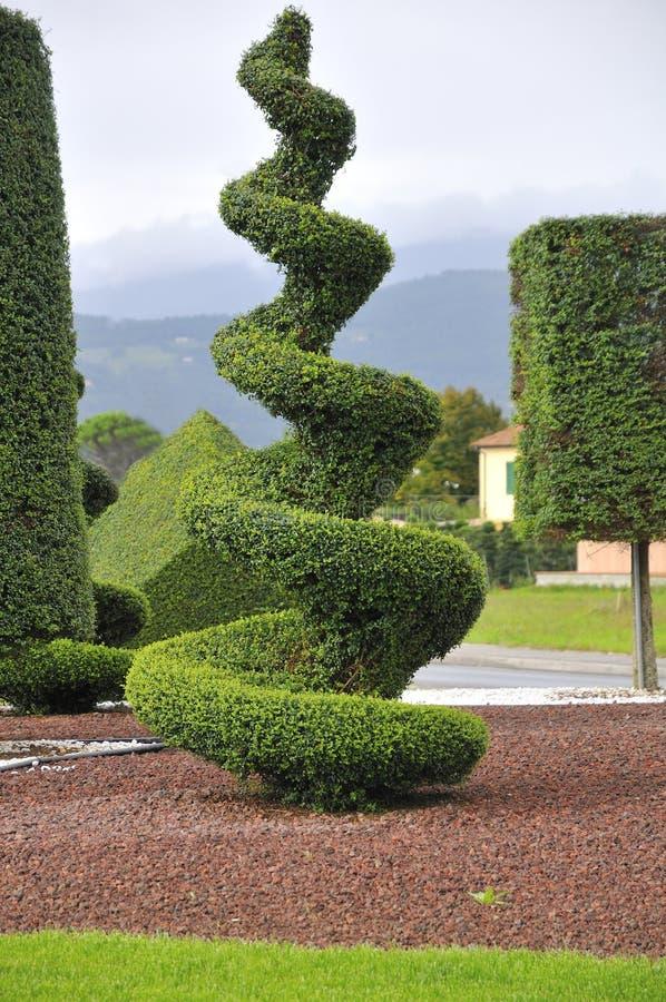 Plante ornementale avec l 39 lagage artistique photos libres for Plante ornementale
