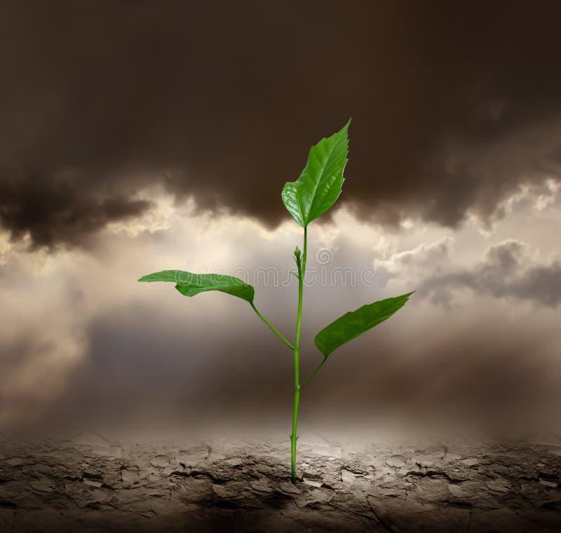 Plante a terra inoperante crescente da calha. imagens de stock
