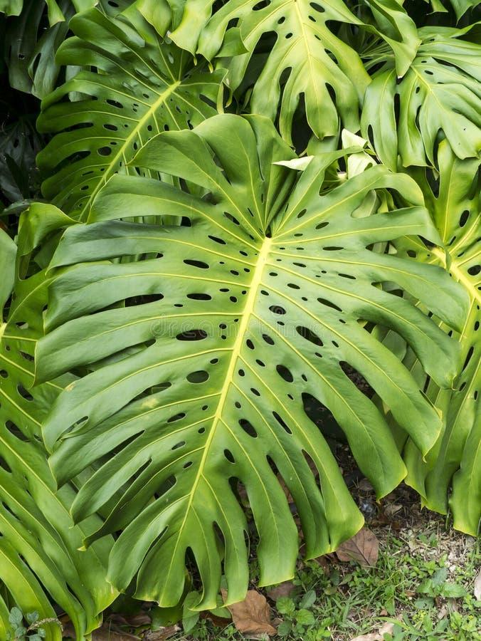 Plante tropicale image stock image du jungle florida for Plante jungle