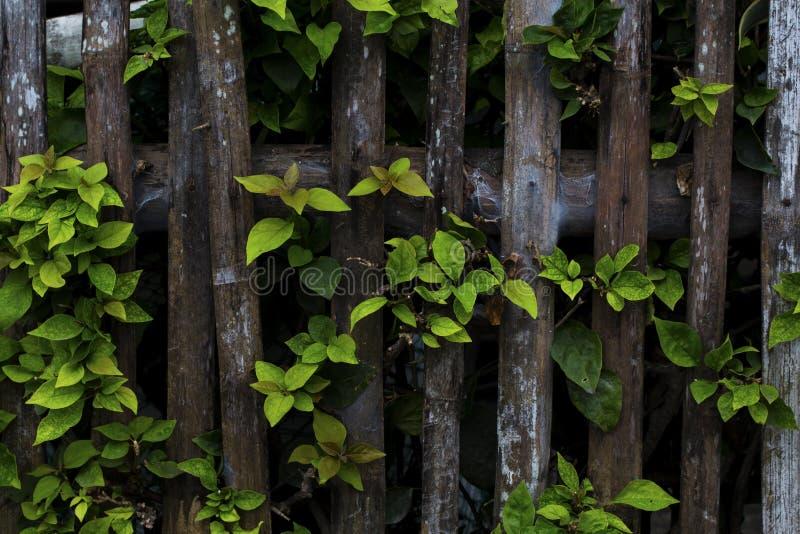 Plante tropicale avec la photo verte de plan rapproché de feuille Barrière en bois rustique et branche d'arbre verte photographie stock libre de droits