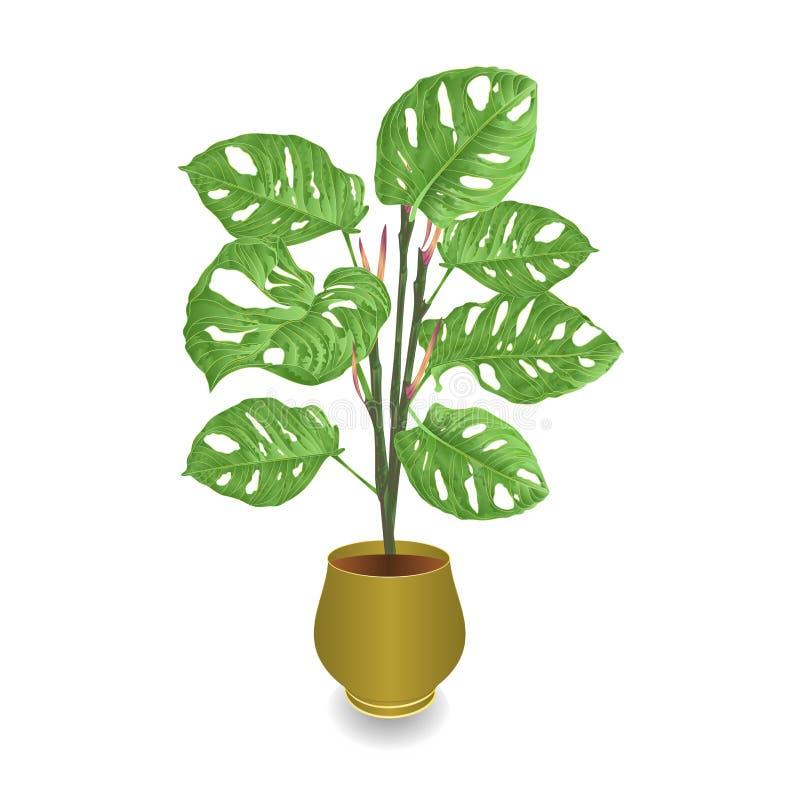 Plante tropicale de deliciosa de Monstera dans le pot sur l'aquarelle blanche d'illustration de vecteur de cru de fond botanique illustration de vecteur