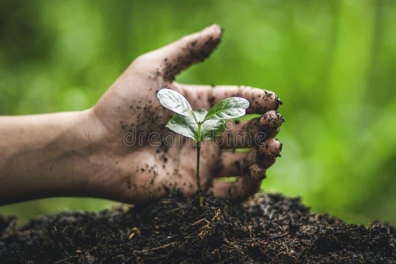 Plante un árbol que riega en el establecimiento de la mano de la naturaleza imagen de archivo