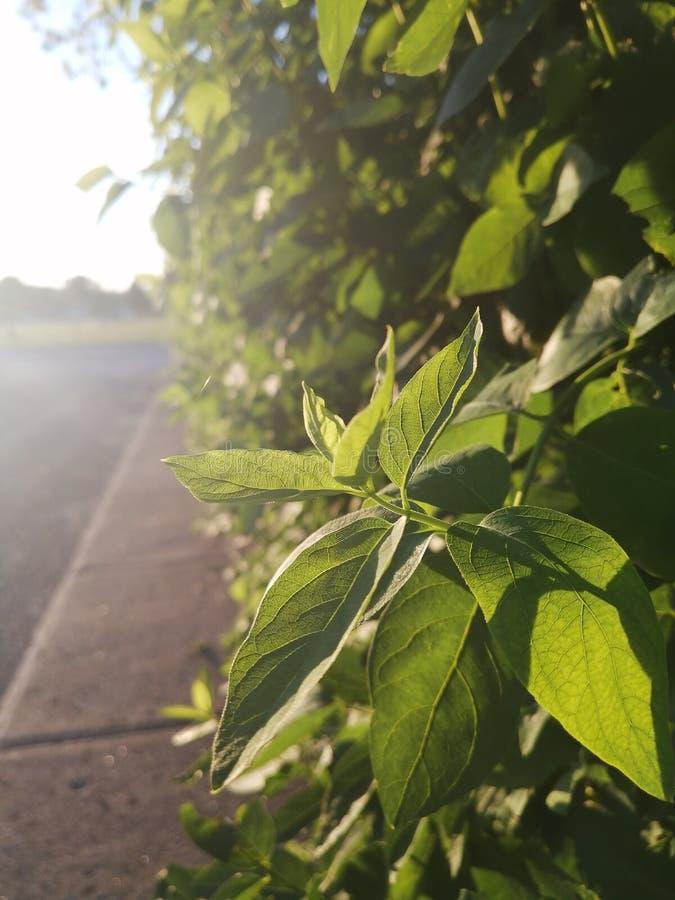 plante photographie stock