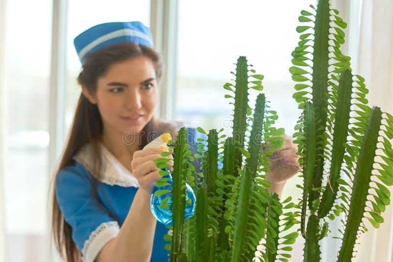 Plante verte à l'intérieur image stock