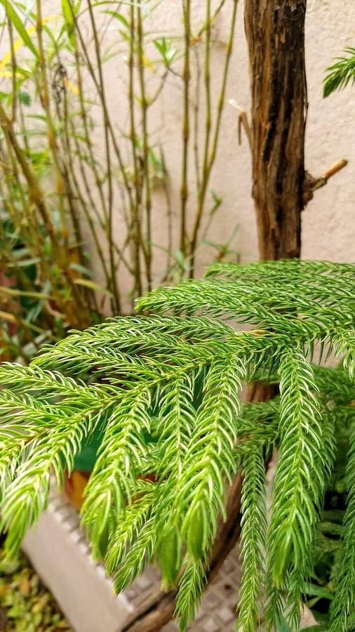 Plante verte à la maison image libre de droits