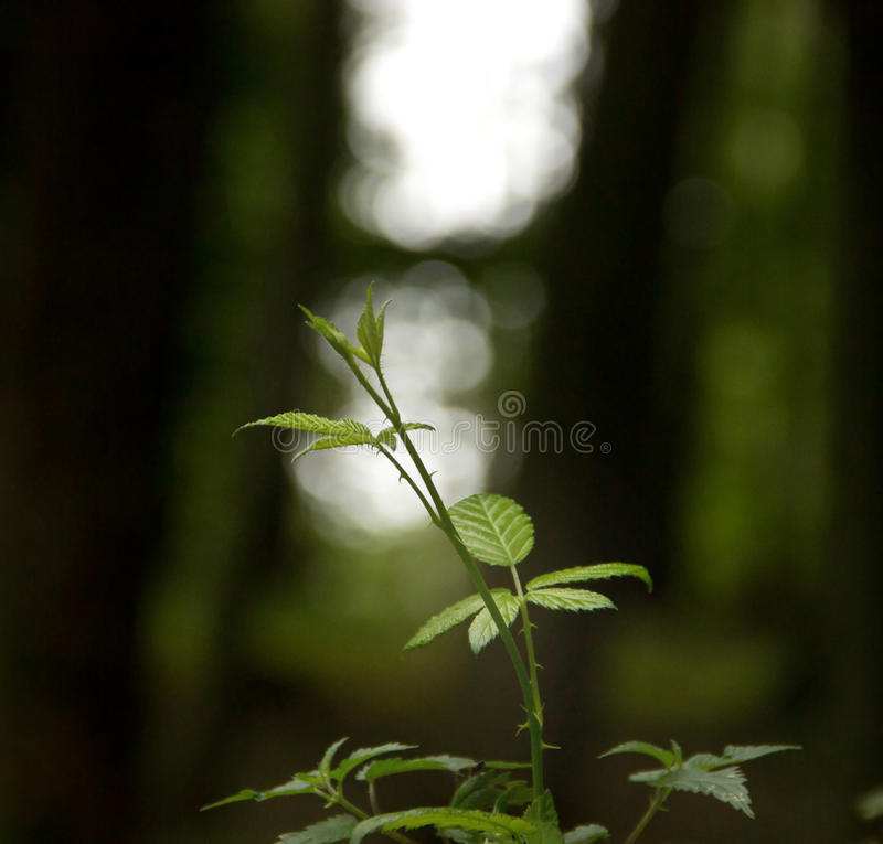 Plante verte photo stock