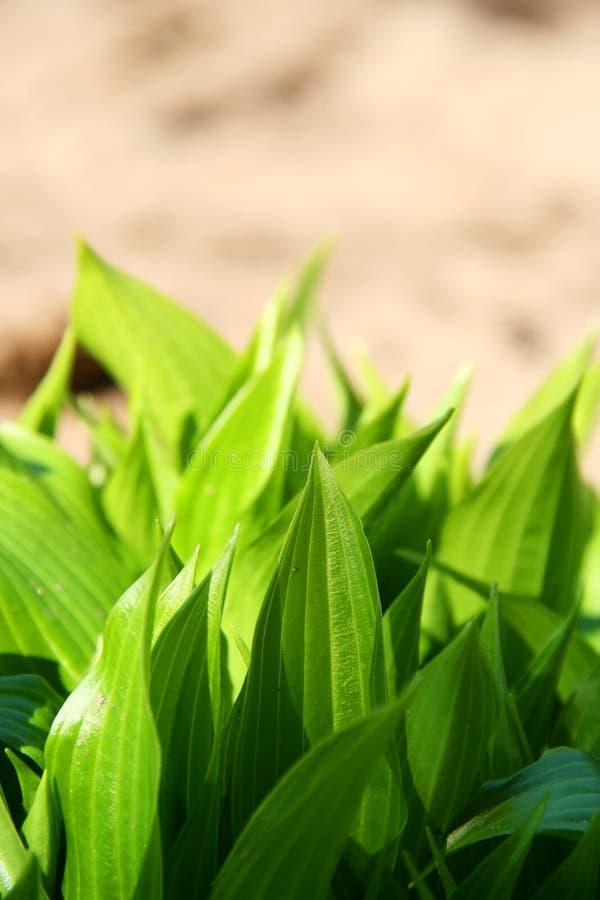 Plante verte photos libres de droits