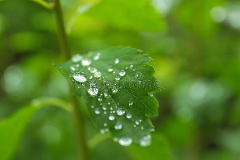 Plante verte avec le feuillage humide dehors le jour pluvieux images libres de droits