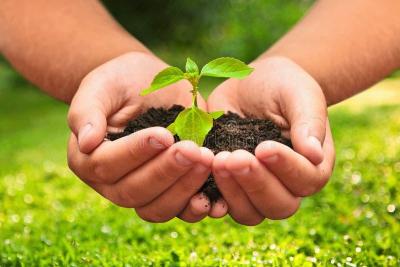 Plante verte dans des mains d'un enfant images libres de droits
