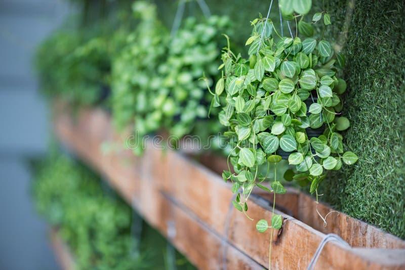Plante verte dans le bac image stock