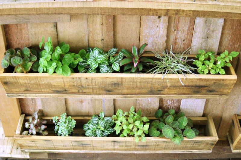 Plante verte dans le plateau en bois image stock