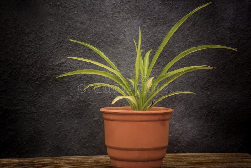 Plante verte dans le pot d'argile photographie stock libre de droits