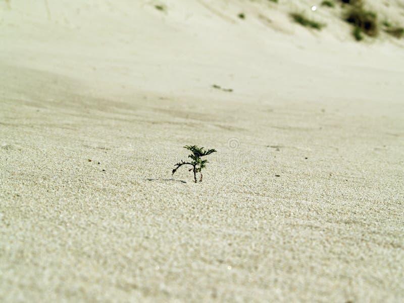 Plante verte dans le sable photographie stock libre de droits