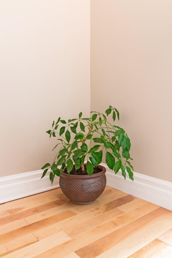 Plante verte chambre plante verte dans une chambre a coucher pingl par ebony jordan sur maison - Plante verte dans une chambre a coucher ...