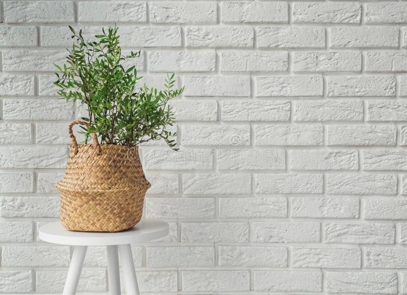 Plante verte dans un panier décoratif dans l'intérieur moderne photographie stock