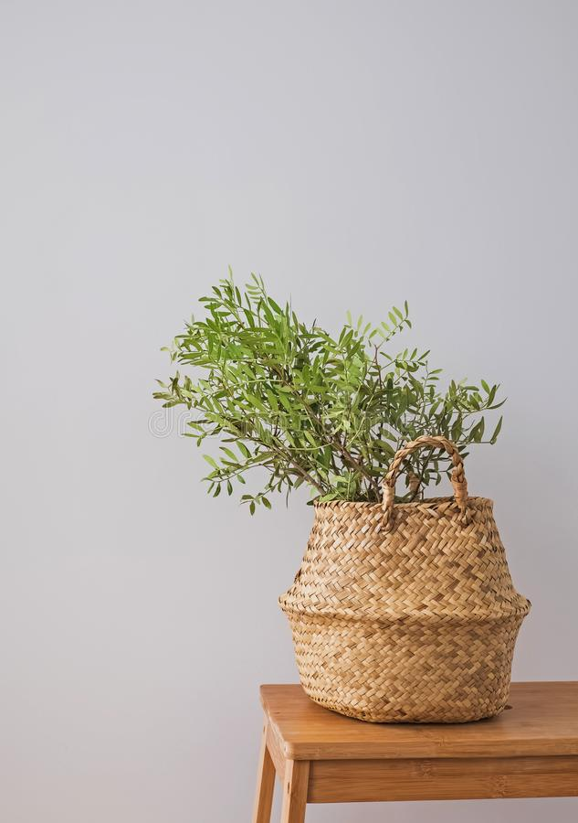 Plante verte dans un panier décoratif dans l'intérieur moderne photo stock