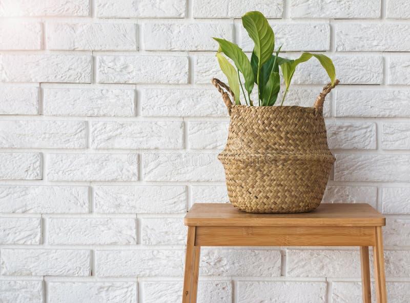 Plante verte dans un panier de paille près du mur de briques blanc photo libre de droits